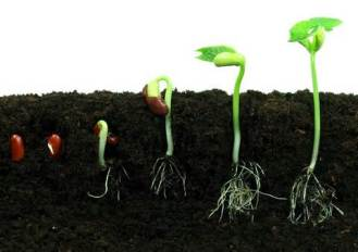 seedtosprout